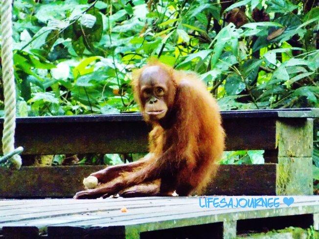 orang one