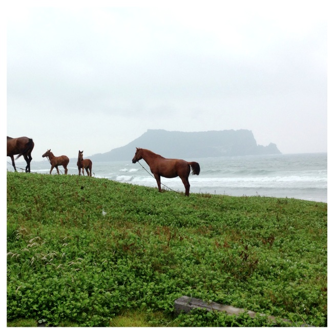 Stumbled upon these deserted beach in the fog. Jeju Island, South Korea.